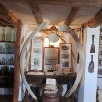 Whale exhibit